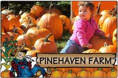 pinehaven farm | ... Pinehaven Farm Pumpkin Patch & Harvest Festival ($30 value) located in