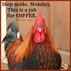 Flock Focus Friday with The Chicken Chick ® Coffee Is Life, I Love Coffee, Coffee Art, Chicken Chick, Chicken Humor, Black Copper Marans, Coffee Jokes, I Hate Mondays, Chickens And Roosters
