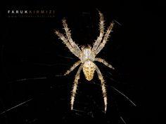 500px'te Faruk Kırmızı tarafından Spider fotoğrafı #spider