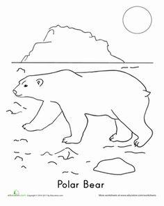 Kindergarten First Grade Animals Worksheets Polar Bear Coloring Page