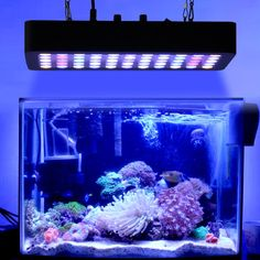 Global Star Reef Aquarium LED Lights, Dimmable LED Aquarium Lighting Full Spectrum with Crystal Lens for Fish Tank/ Coral Reef Growing Aquarium Lamp, Coral Reef Aquarium, Glass Aquarium, Led Aquarium Lighting, Indoor Hydroponics, Marine Plants, Amazing Aquariums, Fish Tank Lights