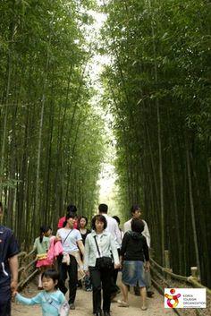 #Damyang Bamboo Festival (담양 대나무 축제)