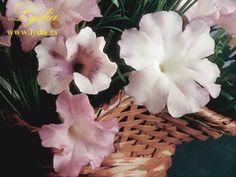 LYDIA - PORCELANA FRÍA - Petunias.