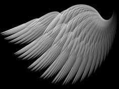 A Swans Wing by *Thelma1 on deviantART