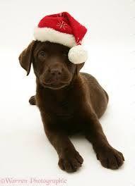 puppies christmas - Buscar con Google