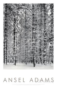 Pine Forest in Snow, Yosemite National Park, 1932 Posters by Ansel Adams at AllPosters.com