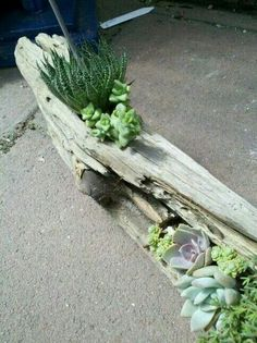 Driftwood Succulent Garden by Michael Romero Succulents In Containers, Cacti And Succulents, Planting Succulents, Planting Flowers, Garden Art, Garden Plants, Indoor Plants, Garden Design, Potted Garden
