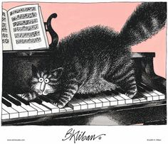 puss playing piano