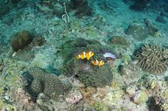 Scuba diving @koh phi phi #diving #Thailand #scuba #arctivity arctivity.com