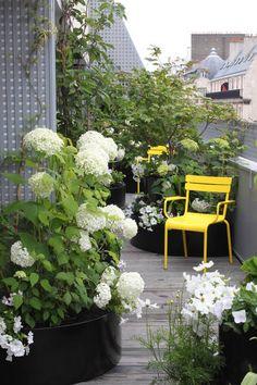 miniature Une terrasse pourtant étroite..., Paris, Xavier De Chirac - paysagiste