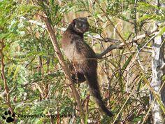 Dwarf mongoose Kruger National Park, National Parks, Mongoose, Dwarf, View Photos, Safari, Animals, Animales, Animaux