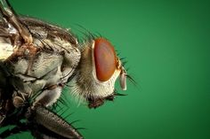 Macro Photography of Brown and Black Fly · Free Stock Photo All Animals Pictures, Black Fly, Pest Control Services, Garden Guide, Bugs And Insects, Reference Images, Macro Photography, Creepy, Bee