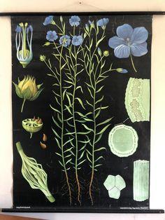 Botanical Illustration, Botanical Prints, Classroom Walls, Classroom Ideas, Vintage School, Chart Design, Burke Decor, Dark Backgrounds, Back Tattoo