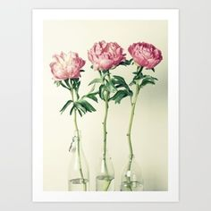 Peony+No.+3.+Original+Fine+Art+Photograph+by+Hilary+Upton.    Hilary+Upton+prints+are+produced+at+a+professional+photo+lab+and+printed+on+a+premier+lustre+paper.+This+is+a+fantastic+heavy+weight+paper+with+a+satin+matte+finish;+it+offers+bold+rich+blacks,+clean+whites+and+stronger,+brighter,+more+vibrant+colours+that+will+last+a+lifetime.    Artist+Signed+and+Dated+(on+back).+Packaged+and+shipped+with+extra+care...