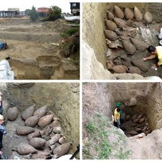 A team of archaeologists discovered a perfectly preserved cellar with amphorae from the V BC, over the last days of the archaeological excavations in the Bulgarian coastal town of Nesebar. Archaeologists found more than 30 untouched amphorae – ceramic vessels for transportation and preservation of wine and olive oil.
