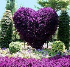 Garden Design vertical purple heart - landscaping ideas - adding spectacular centerpieces to your backyard.°° - Yard landscaping and house exterior wall decorating with vertical elements look spectacular Purple Love, All Things Purple, Shades Of Purple, Purple Flowers, Purple Hearts, Purple Stuff, Dark Purple, Backyard Garden Design, Garden Art