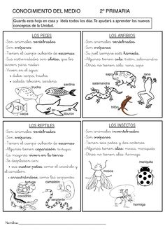 Los animales Bilingual Classroom, Spanish Classroom, Teaching Spanish, Science Lessons, Science For Kids, Science And Nature, Spanish Anchor Charts, Animal Projects, Science Classroom
