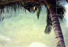 BORACAY BEACH.    Feel the ocean breeze. De tropische stranden met palmbomen maken Boracay tot een paradijs van rust en ontspanning. Bekend als het eiland met de witste stranden ter wereld is het de inspiratie voor onze collectie 'Boracay Beach'. De lichte tinten, het white wash hout en kokosnoot geven het interieur een zomerse bries. Plant Leaves, Beach, Plants, The Beach, Beaches, Plant, Planets