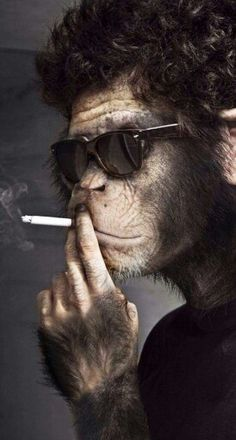 """I didn't choose the thug life. The thug life chose me. Monkey See Monkey Do, Monkey Art, Monkey Pictures, Funny Animal Pictures, Animals And Pets, Funny Animals, Cute Animals, Monkey Wallpaper, Planet Of The Apes"