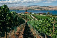 Lake Chelan Wineries featured in the NY Times. Check it out, and see  if your local favorite is included.
