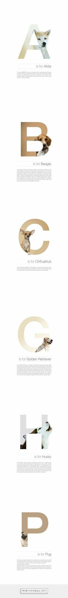 Designer Matches Letters Of The Alphabet With Different Dog Breeds - DesignTAXI. Crea Design, Creative Design, Graphisches Design, Layout Design, Design Trends, Graphic Design Typography, Graphic Design Illustration, Inspiration Typographie, Web Design Mobile
