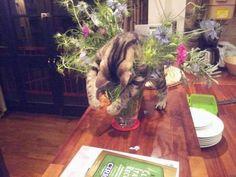 どうして花瓶の上で寝るのか・・・ pic.twitter.com/13gMKltNO9