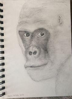 Silver back gorilla sketch