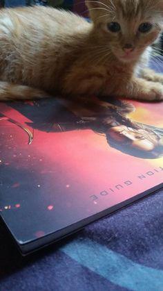 So funny! RT @Joshifer451: My cat, Buttercup, is lying on my Exhibition book! #HungerGamesExhibition #MockingjayPart2