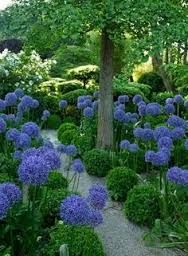 Image result for box hedge ball in herbaceous border