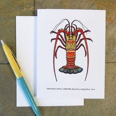 Hawaiian Spiny Lobster Greeting Card, All Occasions, Blank Note Card, Original Scientific Illustration Card