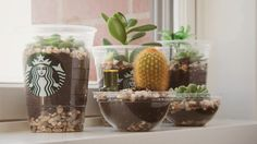 starbucks cup terrariums. Okay before you judge me - I don't care just let people have fun, right :)