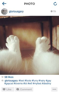 The 18 Most Annoying Cats On Instagram. Truth.