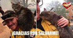 Un bombero ganó un nuevo e inesperado premio luego de rescatar a un gato mientras luchaba contra los furiosos incendios de California.... California, Cats, Grey Cats, Firefighters, Animales, Gatos, Cat, Kitty, Kitty Cats