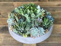 Your place to buy and sell all things handmade Concrete Bowl, Succulent Arrangements, Drought Tolerant, Window Sill, Topiary, Mother Day Gifts, House Warming, Planting Flowers, Flora