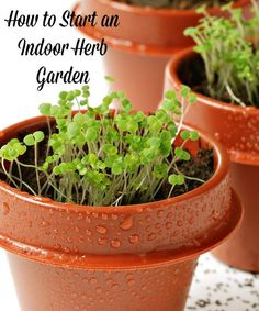 Herb gardens are a great way for beginning gardeners to learn how to grow their own food. Get all the tips you need to start an indoor herb garden here.