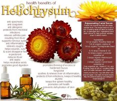 Health Benefits of Helichrysum Essential Oil. Health Benefits of Helichrysum Essential Oil. Health Benefits of Helichrysum Essential Oil. Healing Oils, Healing Herbs, Young Living Oils, Young Living Essential Oils, Doterra Essential Oils, Essential Oil Blends, Carrot Seed Essential Oil, Carrot Seed Oil, Yl Oils