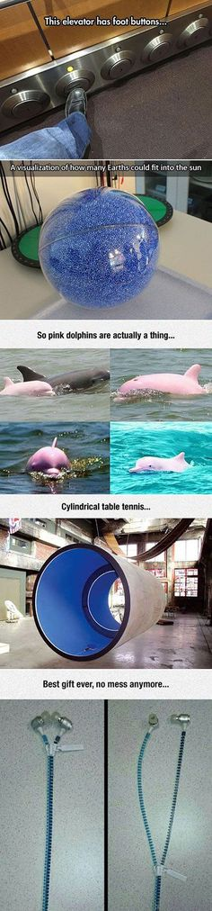 The 1 about pink dolphins are actually another fish called rays I have the earphones in the last one