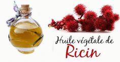 Si l'huile de ricin a autant de succès, cela n'est pas un hasard. Depuis des millénaires, les hommes l'utilisent pour une multitudes de raisons. J'insisterai ici sur ses vertus pour votre corps et pour votre bien être. La richesse de sa composition en fait l'une des huiles les plus nourrissantes . De vos cheveux à votre peau, de vos cils à vos ongles, l'huile de ricin agit en profondeur pour renforcer et revitaliser votre corps. #huile #vegetal #ricin #bienfait #ongles #cheveux #corps…