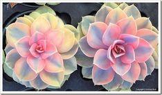 130928_SucculentExtravaganza_163_thumb