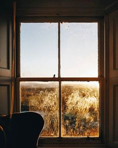 Deco, Windows, Instagram, Sunny Days, Sunnies, Landscape, Home, Sleeve, Sunglasses