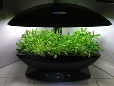 Hack your Aerogarden to take inexpensive lights instead of those ridiculously expensive Aerogarden lights.