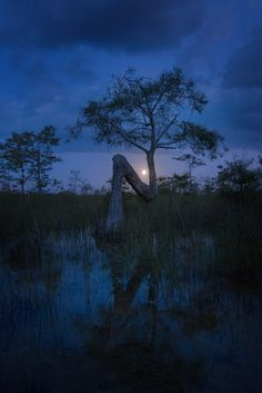 ❤ Night in the Everglades by Jesse Summers / 500px