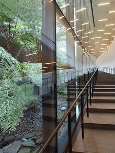 デ・ヤング美術館内部。1階と2階を繋ぐ階段の側にちょっと和風な中庭が置いてある。見せ方が苔に石庭っぽいというか。 Stairs, Museum, Architecture, Room, Furniture, Home Decor, Stairways, Arquitetura, Ladder