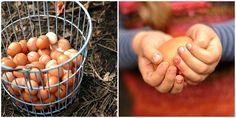 Foxs Lane - eggs
