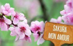 Bellezza naturale: il ciliegio.| Giardinieri in affitto