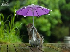 Squirrel that has an umbrella. 傘を差すリス
