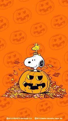 Snoopy in a Jack-O-Lantern🎃on Halloween. Snoopy Halloween, Charlie Brown Halloween, Charlie Brown And Snoopy, Halloween Art, Vintage Halloween, Happy Halloween, Snoopy Christmas, Funny Christmas, Christmas Art