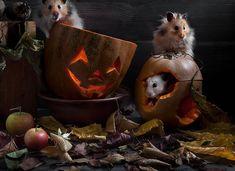 » Необычные натюрморты с милыми хомячками Это интересно!