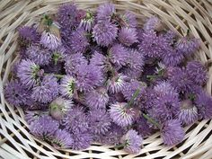 Essbare Blüten 7 Simple Recipes For Preserving Edible Flowers : TreeHugger How A Filterless Air Puri Edible Plants, Edible Garden, Eatable Flowers, Chive Blossom, Flower Food, Wild Edibles, Greens Recipe, Preserves, Herbalism