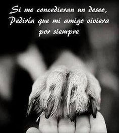 por siempre... http://lavidaconseispatas.blogspot.com/2014/07/perro-para-toda-vida-anciano-no-abandono.html